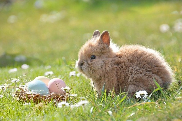 What to Consider Before Buying a Pet Bunny for Easter