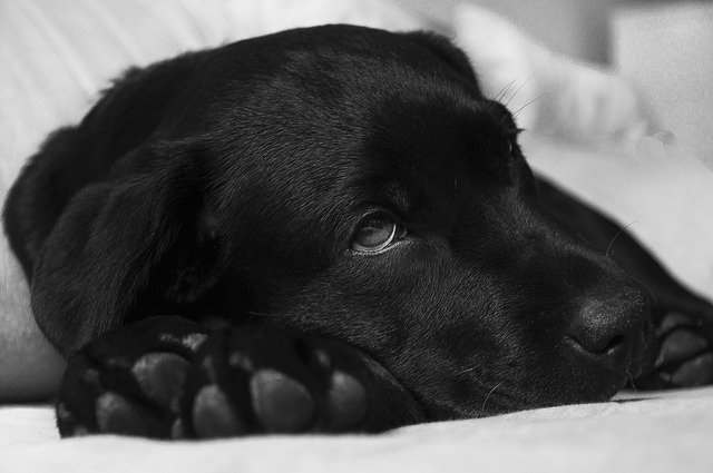 Protecting Your Pet From Distemper