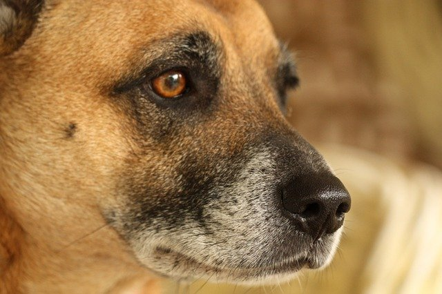 Why Does My Dog Need Year-Round Heartworm Care?