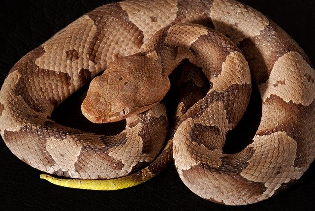 How To Protect Your Pets From Poisonous Snakes