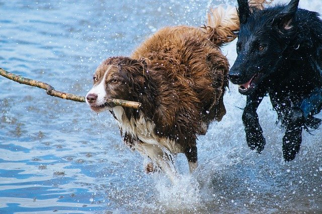 Yes, You Can Catch Leptospirosis From Your Pet