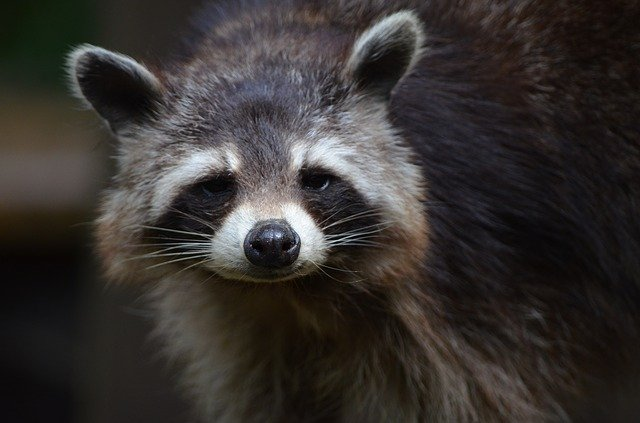 Everything You Need To Know About Rabies