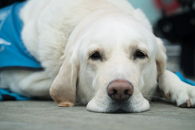 Gastrointestinal Problems In Cats And Dogs